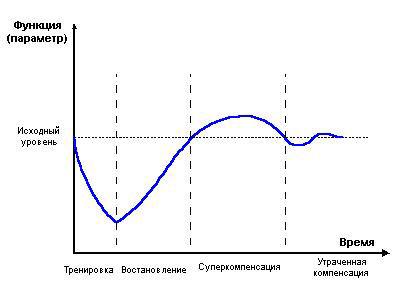 Рост мышц. Суперкомпенсация