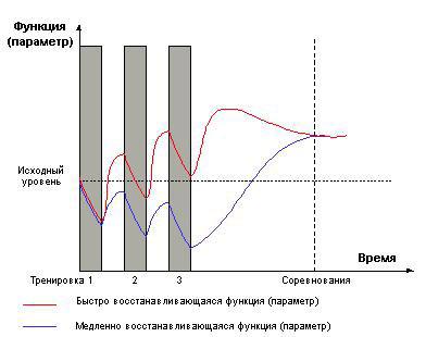 Рост мышц. Микроцикл для двух функций
