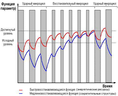 Развитие мышц. Программа (методика) тренировок В. Гончарова